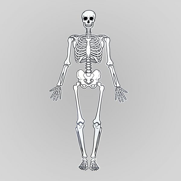 Т651 . Деревянная развивающая игушка.Пазл Скелет. Komarovtoys